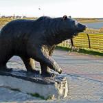 медведь нефтеюганск